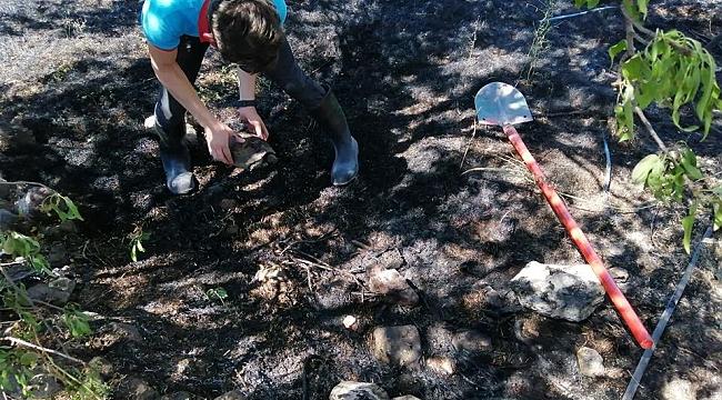 Alevlerin arasında kalan kaplumbağayı itfaiye kurtardı