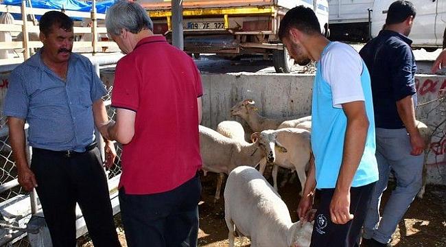 vatandaşlar kurbanlık almak için hayvan pazarına akın etti