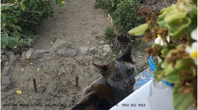 Mahsur Kalan Kediyi İtfaiye Erleri Kurtardı