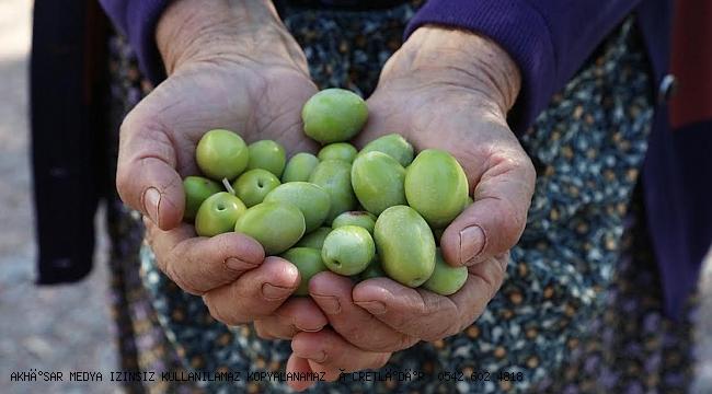 Zeytine prim zeytindostlarını memnun etti