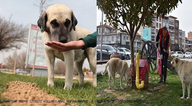 Akhisar Belediyesi sokak hayvanlarını unutmadı