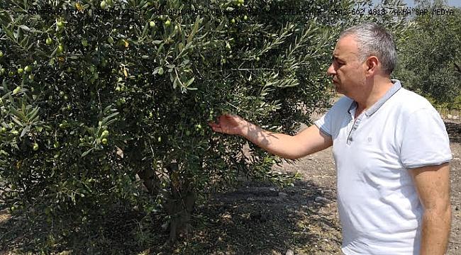 Bakırlıoğlu Zeytin Leprası hastalığına dikkat çekti