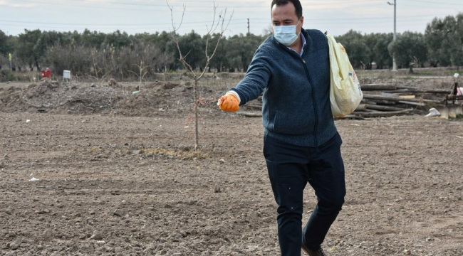 Akhisar'da Ata tohumu Karakılçık buğdayı toprakla buluştu